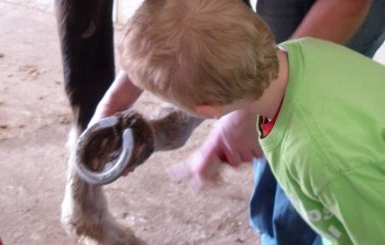 Helping Hands Preschoolers Discover World of Horses at Rosewood Ranch