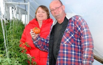 Rosewood Celebrity Tomatoes Available Ahead of Season