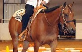 Rosewood Horse Riders Excel at Hutchinson, Prepare for World Show